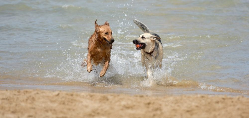 Proper Dog Park Etiquette For Dog Owners   Dog Park Behaviors For Both Dogs And Dog Owners   What To Do And What Not To Do   Dog Park Rules   theMRSingLink