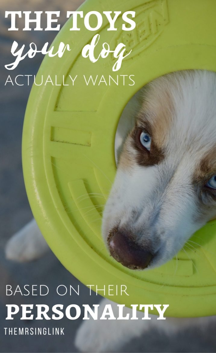 The Toys Your Dog Actually Wants | Dog Toys For Your Dog's Personality | Dog Toys | Dog Personalities | theMRSingLink