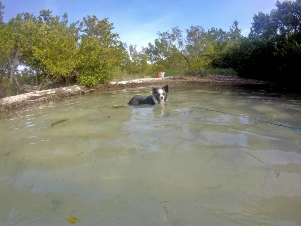 Dog Friendly Florida Keys Beaches