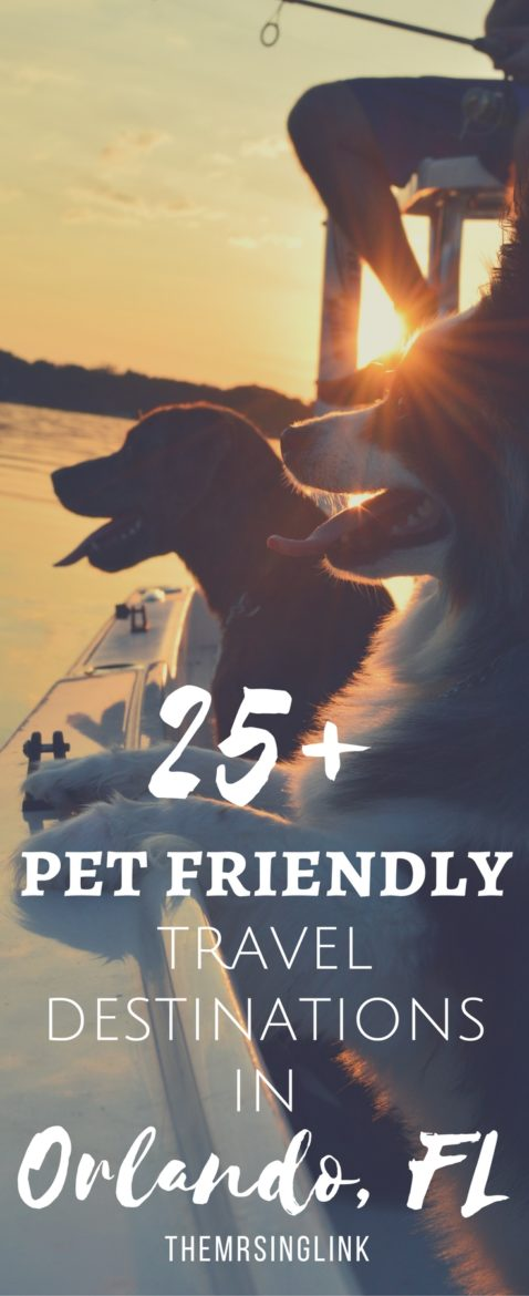 25+ Pet Friendly Travel Destinations In Orlando Florida | Pet Friendly Travel | Florida Travel With Fido | Traveling With Pets | Pet Friendly Places in Orlando Florida | Pet Travel Accommodations In Florida | theMRSingLink
