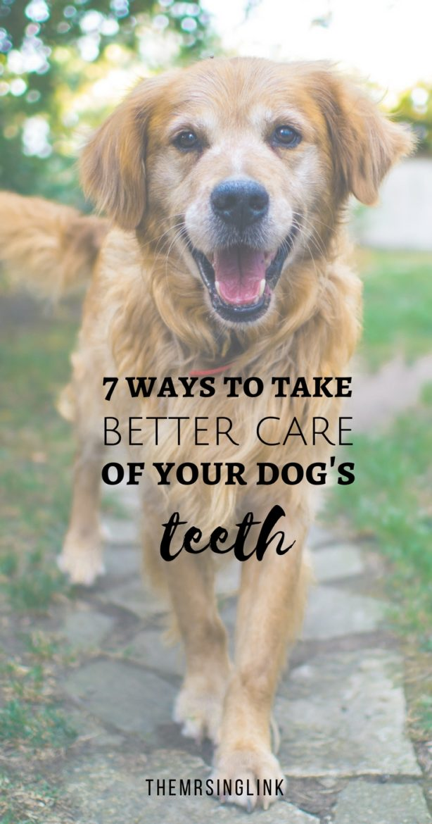 7 Ways to take better care of your dog's teeth   Pet care for dogs   Tips for dog owners   Tips to help keep your dog's teeth clean   Dental Awareness   Pet dental health tips   #dogmom #petcaretips #allaboutdogs   theMRSingLink