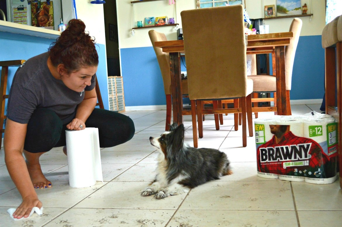 7 Crucial Tips For New Dog Owners When Bringing A Puppy Home | #ad @#TearASquare #Brawny #TargetFinds | Tips for bringing a new puppy home | Adjusting to life with a new puppy | New dog owners - 7 things you need to know | theMRSingLink